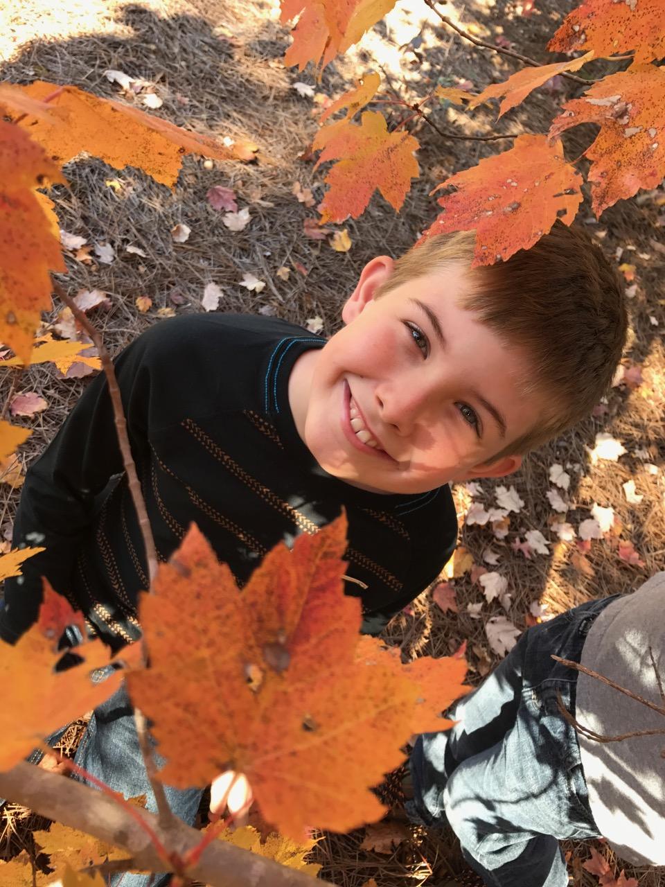 Fall leaves inHolly Springs, NC