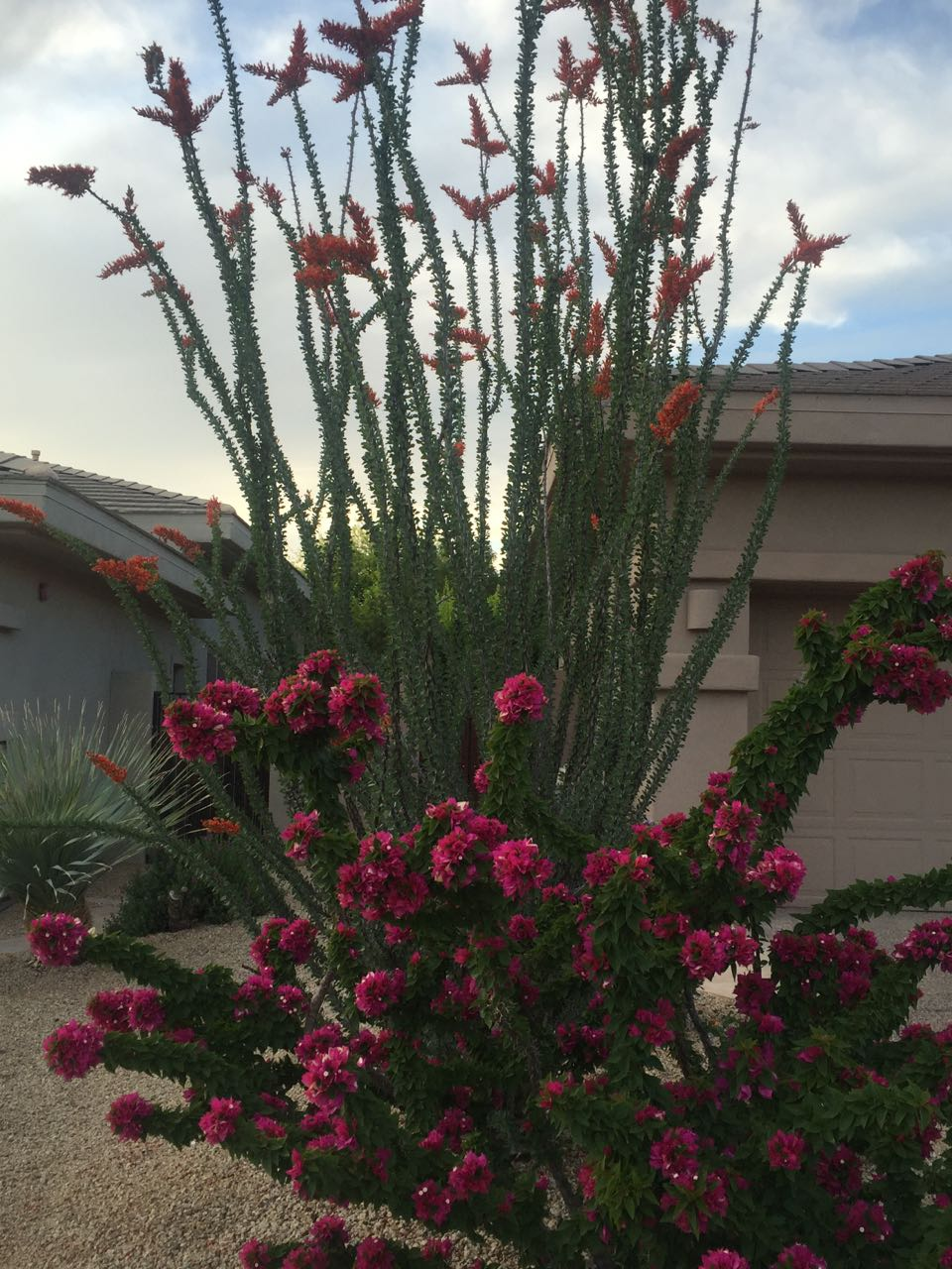 Scottsdale AZ Cactus