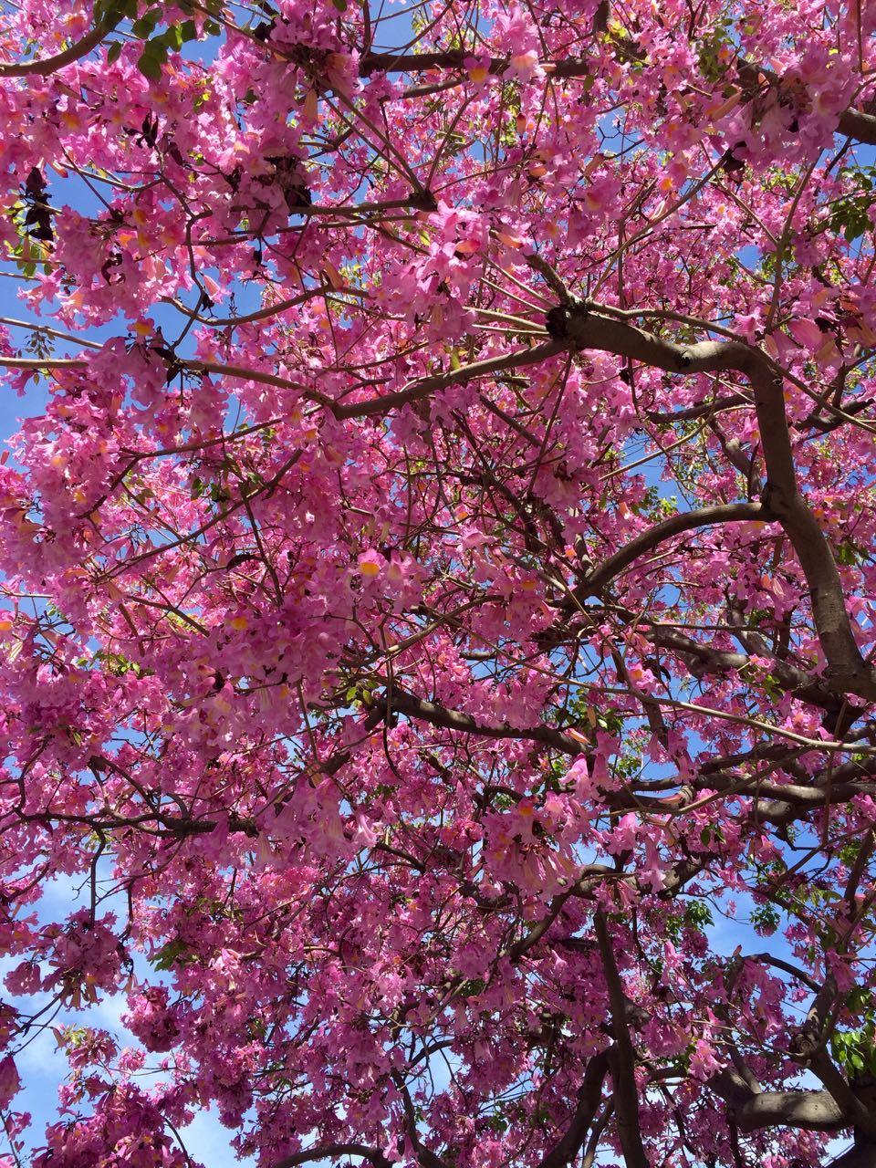 Beautiful Disneyland Tree