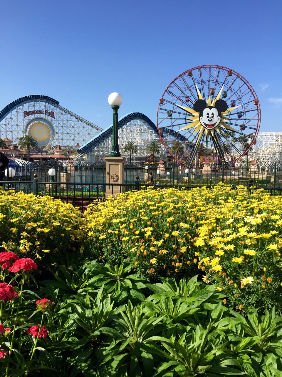 Disney\'s California Adventure Park Flowers and Fun Wheel