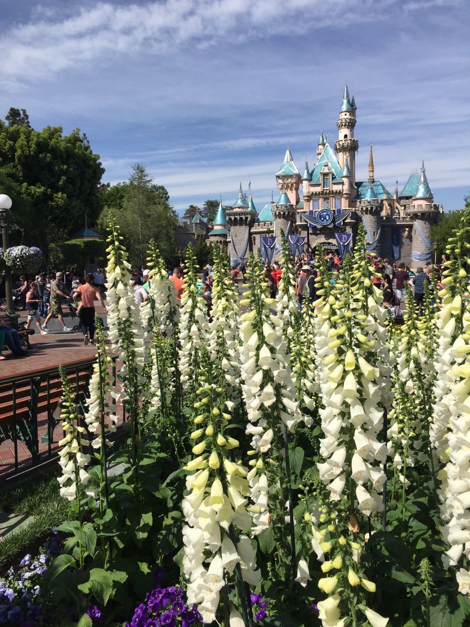 Sleeping Beauty Castle & Flowers