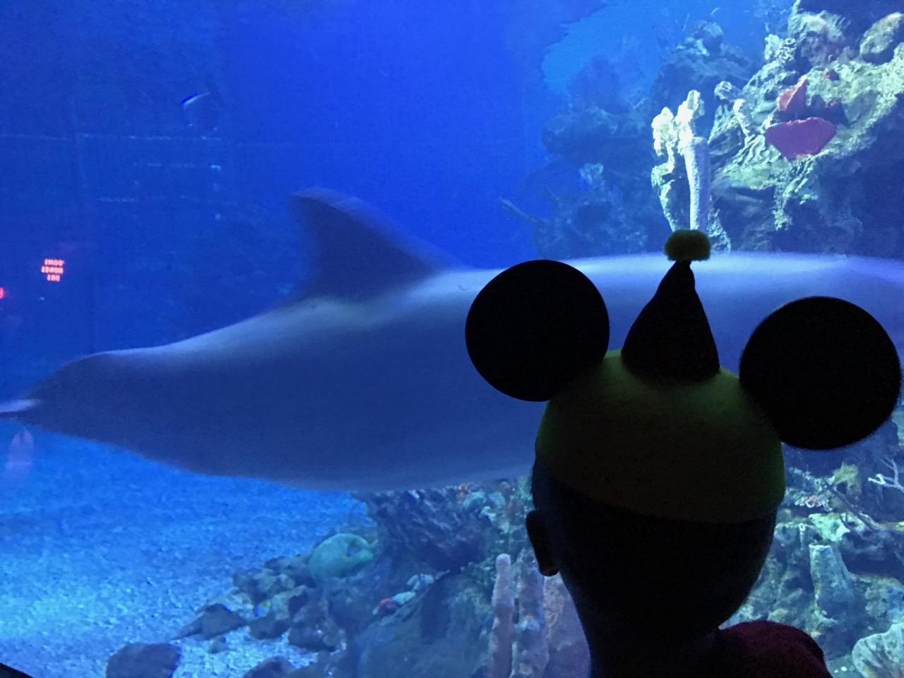 Epcot Living Seas Dolphin