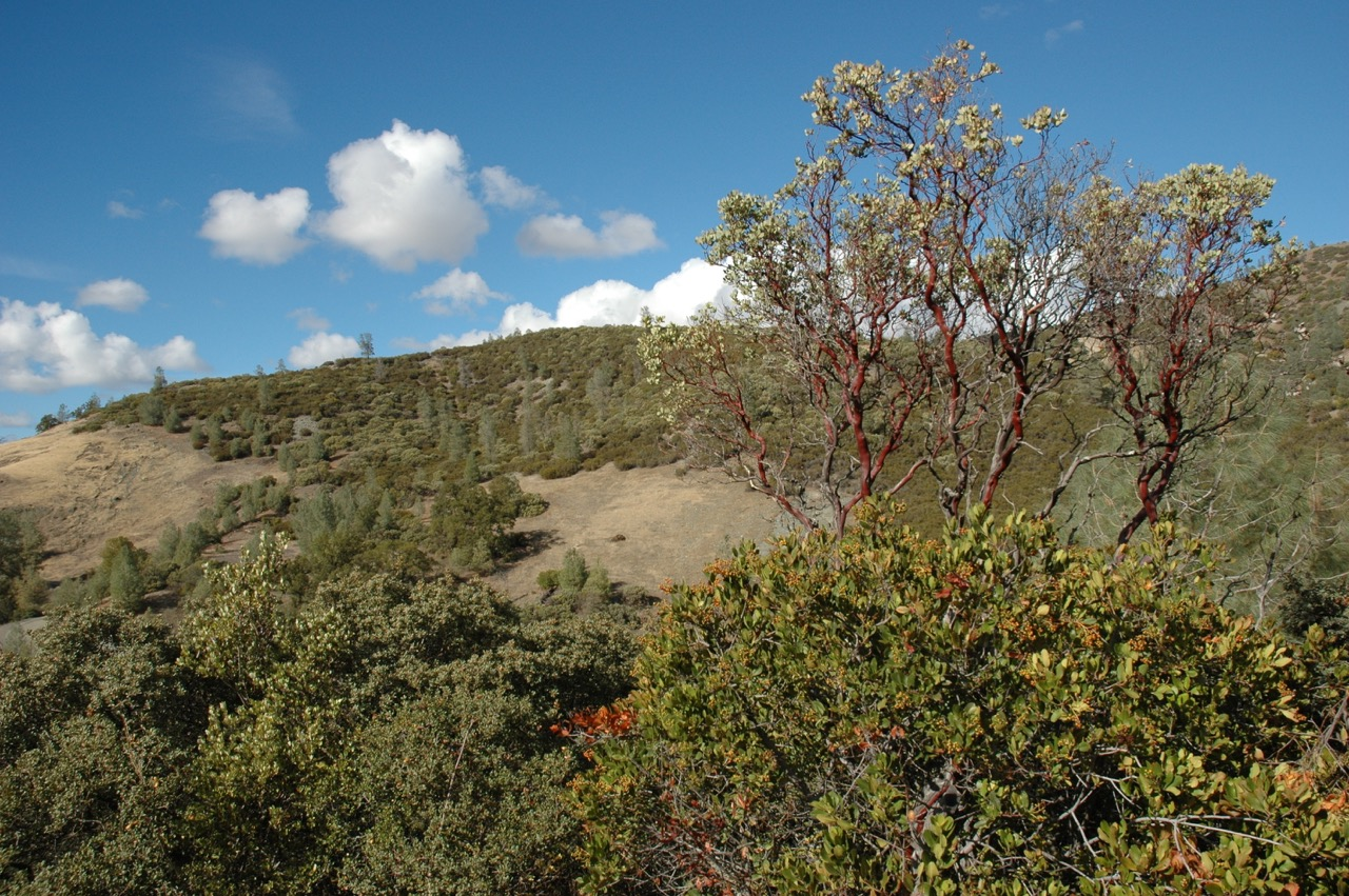 California Countryside Nature