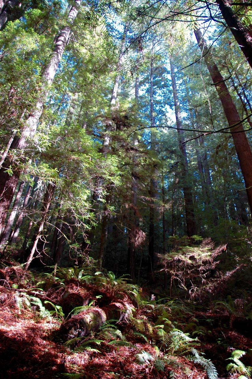 Russian Gulch State Park Mendocino California