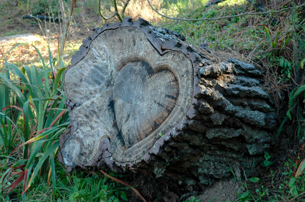 Brewery Gulch Inn Heart Tree Stump