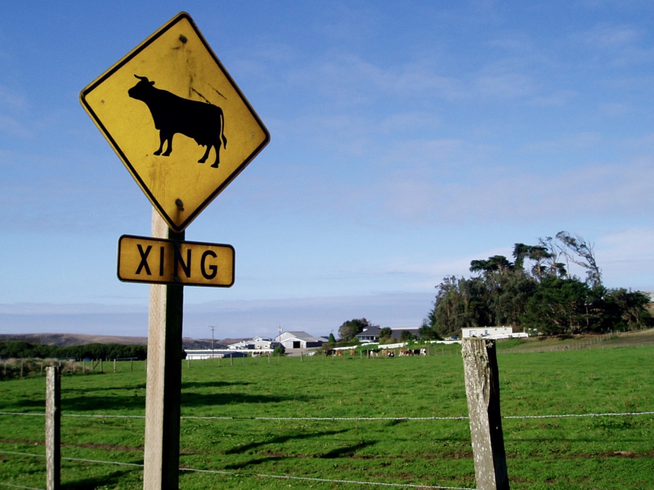 Cow Crossing Sign Route 1 California
