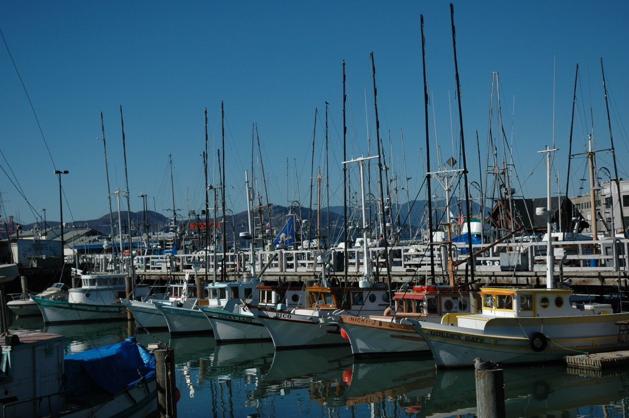 Sailboats Docked in San Francisco CA