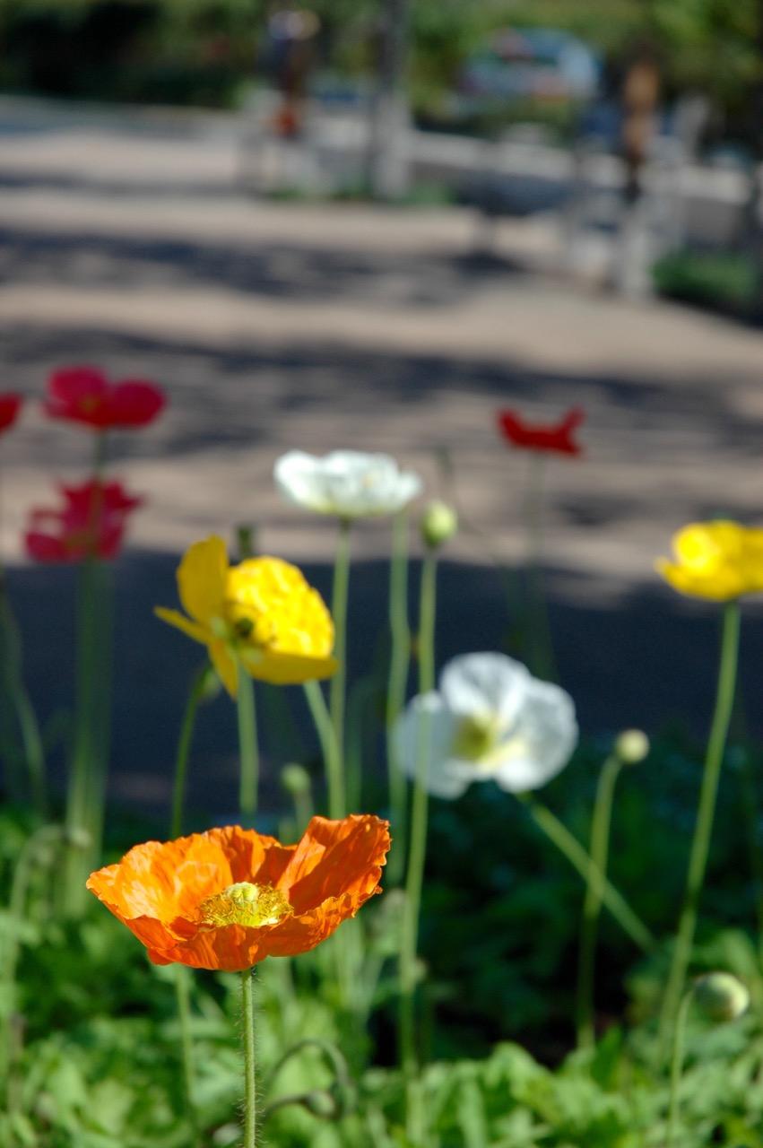 Flower at Robert Mondavi Winery Napa Valley CA
